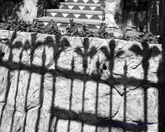 Fleur de Lis (Photoz Darkly) Tags: shadow blackandwhite bw monochrome blackwhite spain gate ibiza fleurdelis