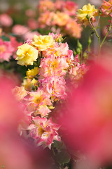 20160522-D7-DS7_2392.jpg (d3_plus) Tags: park street sky plant flower nature japan garden walking drive tokyo nikon scenery bokeh fine daily bloom   nikkor   kanagawa   dailyphoto touring     thesedays  fineday  jindaiji          d700 kanagawapref nikond700