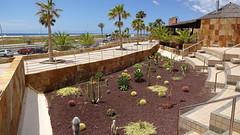 Kaktusgarten auf Fuerteventura (Fuertejan) Tags: sony fuerteventura kanaren urlaub jandia kaktenen