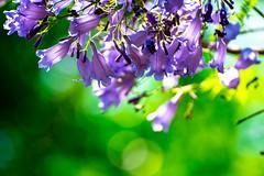 Dans les nuits, Il y a une galaxie dans tes yeux. (- Ali Rankouhi) Tags: park flowers blue india green purple display bangalore vivid cubbon 2016