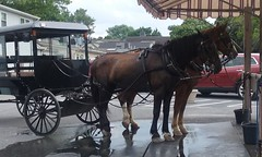 20160624_161958 (joyannmadd) Tags: amish buggy ride intercoursew pennsylvania farm kitchenkettlevillage lancaster pa