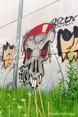 imm015_15 (coloredsteel) Tags: train canon graffiti ae1 steel kunst 400 program colored bombing ulm spotting rossmann trainwriting
