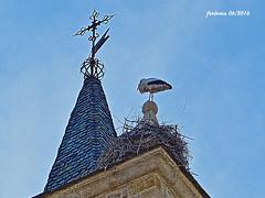 Zamora 01 Repartindose la torre (ferlomu) Tags: iglesia zamora cigea ferlomu
