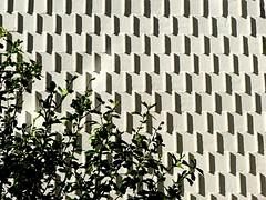 Blanco y verde con sombras. (camus agp) Tags: espaa pared edificio panasonic sombras blancos fz150