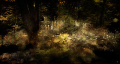 Lights in the garden (Alexander Miroshnikov) Tags: light garden dreams alarecherchedutempsperdu