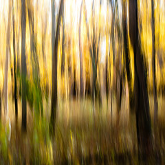 Autumn Afternoon In Woods 022 (noahbw) Tags: autumn trees sunlight abstract motion blur leaves forest square landscape movement woods nikon natural branches icm d5000 intentionalcameramovement noahbw ryersonwoodsforestpreserve