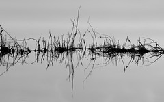 Symmetry (syntithesis) Tags: bw reflection water monochrome blackwhite symmetry simplicity minimalism minimalist