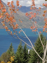Autumn Coloured Trees, Bob's Peak, Queenstown (dannymfoster) Tags: autumn newzealand fall nz southisland queenstown lakewakatipu bobspeak skylinegondola