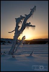 The Frozen Hand - Mt Hood, Oregon (Adrian Klein) Tags: deadtree snowshoeing wintersunrise clearskies canoncamera gitzotripod winterseason crunchysnow oregonmountains adrianklein frozenhand longicicles