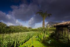villa glicene giardino19 (1 di 1) (villa glicine san vito lo capo) Tags: san lo villa capo con giardino vito affitto