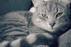 ollie (Ellie Morris) Tags: blackandwhite cat selectivecolour