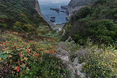 Coastal Bluff (Tōn) Tags: california ca sea santacruz seascape nature water landscape coast unitedstates pacific wildflowers headland waterscape coastalbluffrocky tonyvanlecom