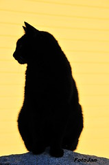 Stray Cat (Mr. Memphis1982) Tags: pictures cat finland photo los foto photographer felix gatos gato stray catus kuva porvoo katt kissa borg explored