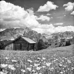 Summer Barn (Petur) Tags: flowers sky italy mountain alps blancoynegro clouds barn blackwhite meadow dolomites