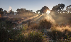 Foggy morning at Royal Park 2012-07-07 (_MG_0684_5_6) (ajhaysom) Tags:
