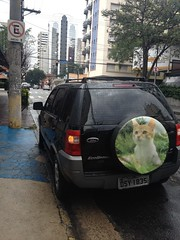 IMG_2688 (lupicoli) Tags: step gato carro pneu gatinho estepe