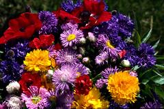 Goodbye too much work. (yvon Merlier) Tags: flowers sea mountain love landscape soe platinumphoto nikond300