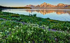 Jackson Lake Sunrise (Jeremy Duguid) Tags: park travel flowers lake mountains reflection nature water sunrise canon landscape dawn grand jeremy jackson national teton tetons duguid 50d jeremyduguid