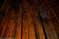 Campfires in the Skies (mccrum) Tags: longexposure camping trees sky orange nature ecology night stars fire scenery skies availablelight environment recreation backlit stacking environmentalism startrails ecosystem outdoorrecreation sportsrecreation â©jeffmccrum2012