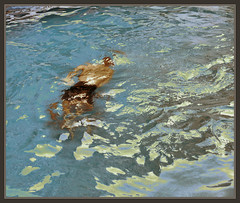 PISCINA-MANRESA-PISCINAS-NATACION-JUEGOS-DEPORTES-VERANO-FOTOS-NADADORES-CALOR-AGUA-ERNEST DESCALS (Ernest Descals) Tags: sea summer espaa hot water pool weather swimming swim mar spain agua skin juegos evolution playa games piscina swimmingpool fotos nadador nadar verano swimmer catalunya piscinas catalua playas calor bages manresa natacion evolucion piel nadadores ernestdescals