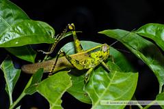 20121027-140 (ajakblackgoat) Tags: macro insect nikonmicro105mmf28 nikond700