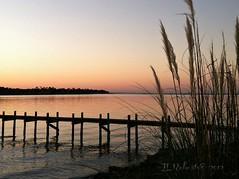dawn (Tara R.) Tags: beach nature sunrise florida seagrass