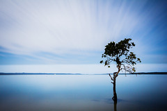 "A tribute to ""Garry's Tree"". (Matthew Post) Tags: longexposure nightphotography tree night canon long exposure post matthew sigma australia mangrove queensland 1020mm poona frasercoast 60d cooloolacoast matthewpost"