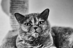 What? 06.11.2012 (Silbersurfer) Tags: cat licht blackwhite dof katze schwarzweiss schatten 366 projekt366 silverefexpro2