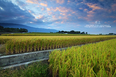 (nodie26) Tags: sky color field star tour rice paddy farm taiwan