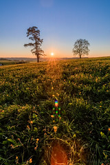 Sunest in the field (Martin Zurek) Tags: flowers blue trees light sunset sky sun tree green nature field yellow zeiss lens landscape bavaria evening spring flare gras flares distagon irsee canon5dsr 5dsr