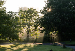 Sun next to badgers (Claire Rosser) Tags: morning sun mist green spring fresh