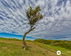 one tree (The Photo Smithy) Tags: toby tree beach clouds coast rocks sydney australia nsw lonetree capebanks kamaybotanybaynationalpark