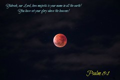 psalm8-1 (Dr. Johnson Cherian) Tags: christian wallpapers scriptures christianart christiancards freegraphics christianwallpapers flowerimages scripturecards freechristianwallpapers christiangrapics wallpapersforgod wallpaperschristian freechristiancards