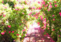 Pergola roses (Podsville) Tags: summer june michigan lansing pergola dodgeturnerhouse