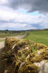 Hadrian's Wall (smitchelrific) Tags: england macro stone moss ruins roman hadrianswall