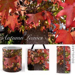 Autumn Leaves from http://ift.tt/1hfrEWq #tree #leaves #nature #products #outdoors #home #technology #arts #clothing (dewelch) Tags: ifttt instagram autumn leaves from httpdouglasewelchcomstore tree nature products outdoors home technology arts clothing
