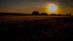 Sunset (Christian He) Tags: canon sterreich sonnenuntergang nacht outdoor natur feld wiese himmel wolken berge dmmerung landschaft wald efs 1022 steinberg kornfeld hgel leiser heiter 80d ernstbrunn