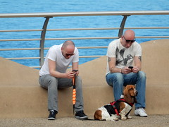 Blackpool Basset (deltrems) Tags: people dog pet men coast women hound lancashire basset blackpool fylde