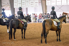 Lined Up for Final Judging (shirley319) Tags: horse texas unitedstates canyon april erica equestrian 2016 d600 horsecompetition ihsa westtexasam zonecompetition noviceflat
