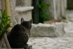 Waiting grey (MassimoRoma) Tags: mountain cold animal fog cat canon eos nebbia gatto montagna freddo animale ovindoli nuvolo bilanciamento