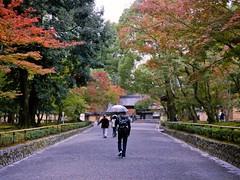 Alone In Kyoto (JRN*) Tags: autumn portrait fall 120 film nature leaves japan 645 kyoto shrine asia alone kodak lostintranslation 金閣寺 kinkakuji contax645 2011 zeissplanart80mmf2