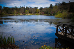 Mount Stewart Lake (bazmcq) Tags: county uk ireland house lake gardens canon eos down mount stewart national trust northernireland northern manor nationaltrust ulster countydown mountstewart 500d northernirelandphotography barrymcqueen yahoo:yourpictures=yoursummer yahoo:yourpictures=waterv2 yahoo:yourpictures=yourbestphotoof2012