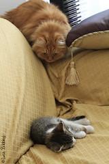 Hunting (Luca Bobbiesi) Tags: phoenix cat feline funny kira ef24105mmf4lisusm canoneos7d