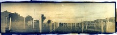 Discount Prices (efo) Tags: cyanotype gumbichromate altprocess alternativeprocesses selfmadecamera christmastreelot mysteriouscamera swinglenspanoramic efo:site=2