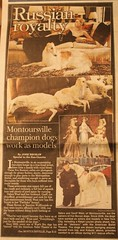 show dog russian borzoi wolfhound ferlinka