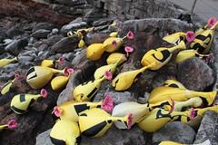 rocks sydney australia shore sculpturebythesea bondibeach squirts