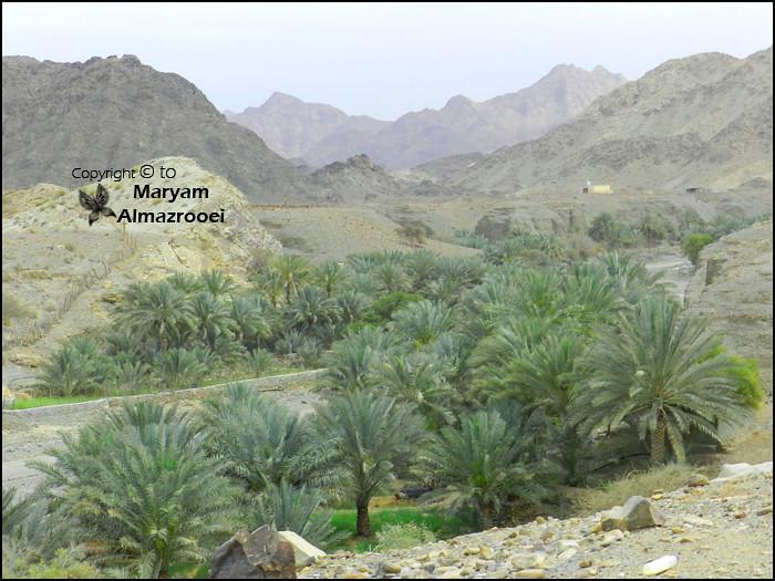 ec90282cb الوادي (Maryam Almazrooei) Tags: mountains nature palm wadi طبيعة جبال وادي  شتاء نخيل
