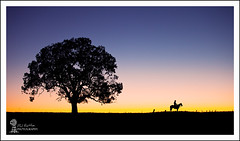 Ride The Sunset (Phil Rettke) Tags: sunset horse tree silhouette cowboy dusk australia outback