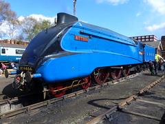 A4 bittern (seanofselby) Tags: heritage diesel hill railway steam a4 barrow bittern roundhouse