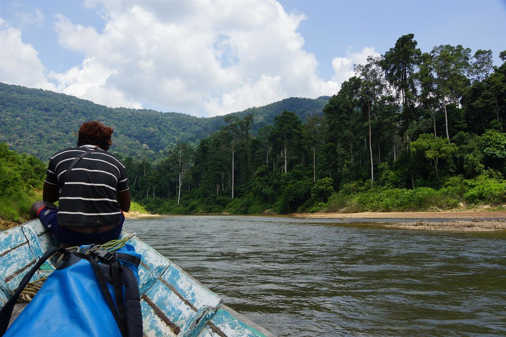 On the river, Endau Rompin National Park, Malaysia
